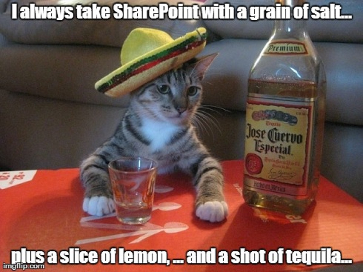 All the SharePoint Cats